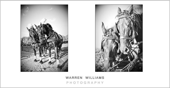 bridal horse and cart