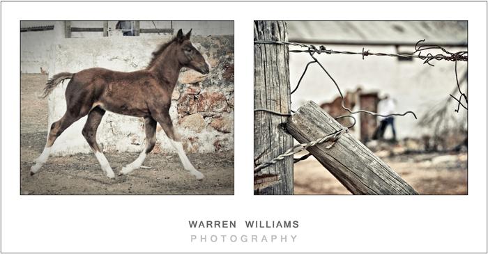 Izandi and Du Toit engagement shoot, Warren Williams Photography 20