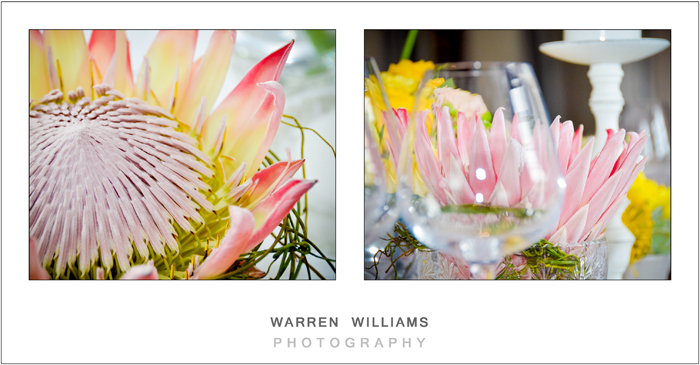 Warren Williams Photography Alle Bleue-15